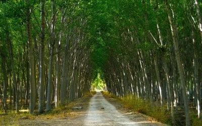 Una foresta di pioppi per la bonifica della Terra dei Fuochi